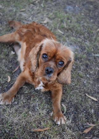 bunny - bankisa park puppies - 1 of 31 (24)