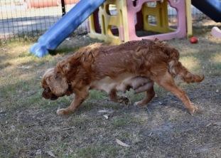 bunny - bankisa park puppies - 1 of 31 (3)