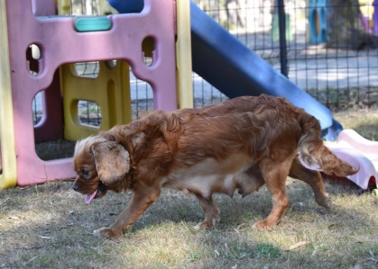 bunny - bankisa park puppies - 1 of 31 (5)