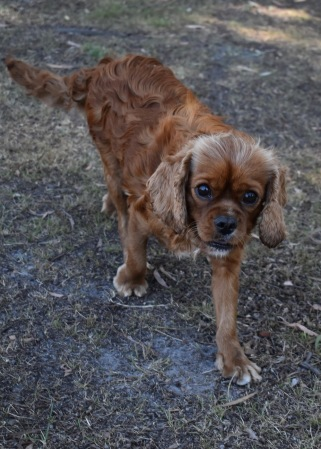 bunny - bankisa park puppies - 1 of 31 (9)