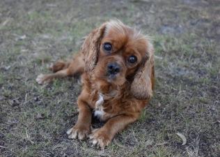 bunny - bankisa park puppies - 1 of 31