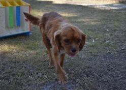shena - bankisa park puppies - 1 of 36 (1)