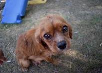 shena - bankisa park puppies - 1 of 36 (11)
