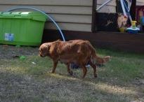 shena - bankisa park puppies - 1 of 36 (12)