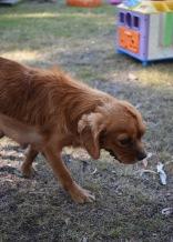 shena - bankisa park puppies - 1 of 36 (14)