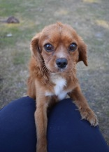 shena - bankisa park puppies - 1 of 36 (15)