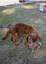 shena - bankisa park puppies - 1 of 36 (16)