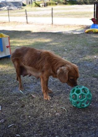 shena - bankisa park puppies - 1 of 36 (22)