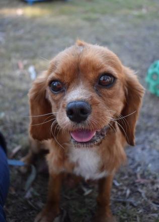 shena - bankisa park puppies - 1 of 36 (25)