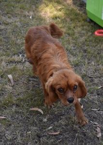 shena - bankisa park puppies - 1 of 36 (28)
