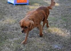 shena - bankisa park puppies - 1 of 36 (3)