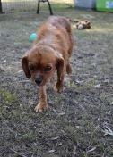 shena - bankisa park puppies - 1 of 36 (34)