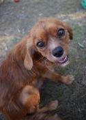 shena - bankisa park puppies - 1 of 36 (35)