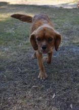 shena - bankisa park puppies - 1 of 36 (5)