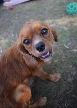 shena - bankisa park puppies - 1 of 36 (7)