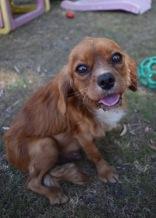 shena - bankisa park puppies - 1 of 36 (8)