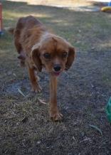 shena - bankisa park puppies - 1 of 36 (9)