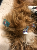 Jett got into a packet of stickers! And stole a shoe