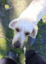 Adelaide - Banksia park puppies - 1 of 46 (11)