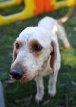 Adelaide - Banksia park puppies - 1 of 46 (13)