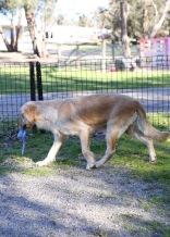 IVY - banskia park puppies - 1 of 50 (13)