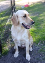 IVY - banskia park puppies - 1 of 50 (19)