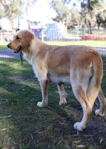 IVY - banskia park puppies - 1 of 50 (21)