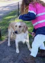 IVY - banskia park puppies - 1 of 50 (24)