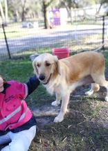 IVY - banskia park puppies - 1 of 50 (25)
