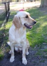 IVY - banskia park puppies - 1 of 50 (26)