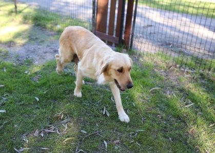 IVY - banskia park puppies - 1 of 50 (34)