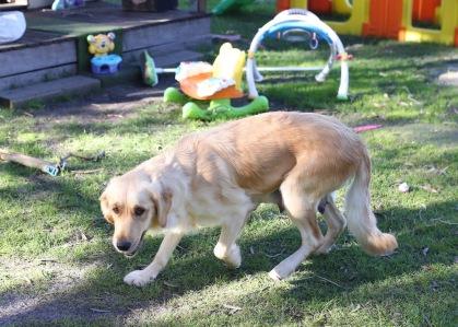 IVY - banskia park puppies - 1 of 50 (39)