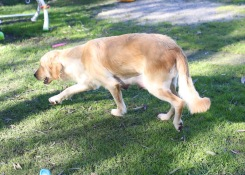 IVY - banskia park puppies - 1 of 50 (47)