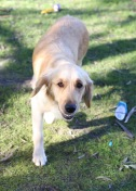 IVY - banskia park puppies - 1 of 50 (48)