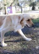 IVY - banskia park puppies - 1 of 50 (49)