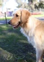 IVY - banskia park puppies - 1 of 50 (6)