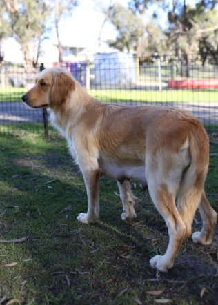 IVY - banskia park puppies - 1 of 50 (8)
