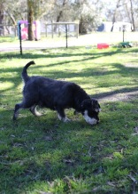 LILA - Bankisa park puppies - 1 of 31 (11)