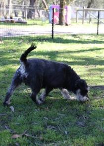 LILA - Bankisa park puppies - 1 of 31 (13)