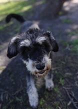LILA - Bankisa park puppies - 1 of 31 (17)