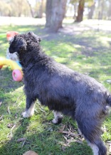LILA - Bankisa park puppies - 1 of 31 (18)