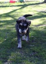 LILA - Bankisa park puppies - 1 of 31 (19)