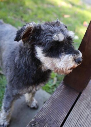 LILA - Bankisa park puppies - 1 of 31 (20)