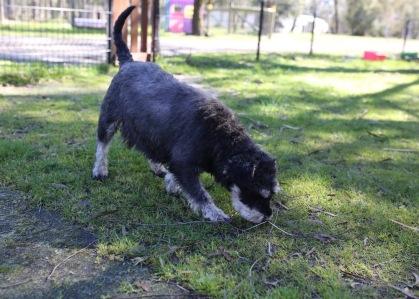 LILA - Bankisa park puppies - 1 of 31 (23)