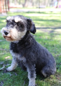 LILA - Bankisa park puppies - 1 of 31 (24)
