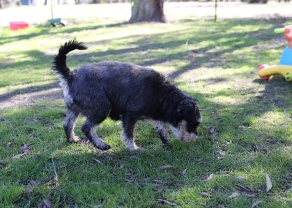 LILA - Bankisa park puppies - 1 of 31 (25)
