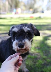 LILA - Bankisa park puppies - 1 of 31 (27)