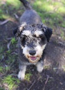 LILA - Bankisa park puppies - 1 of 31 (28)