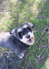 LILA - Bankisa park puppies - 1 of 31 (29)