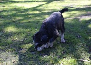 LILA - Bankisa park puppies - 1 of 31 (6)